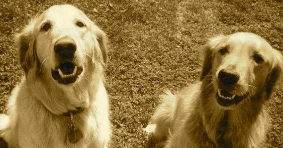 Lucy (right) and Linus (left). They were more than just a pet, they were our family.